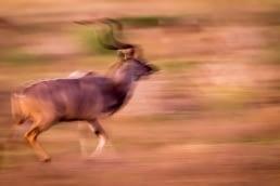 livestock-photography